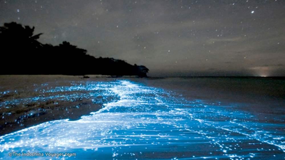 bio-luminescent-plankton.jpg